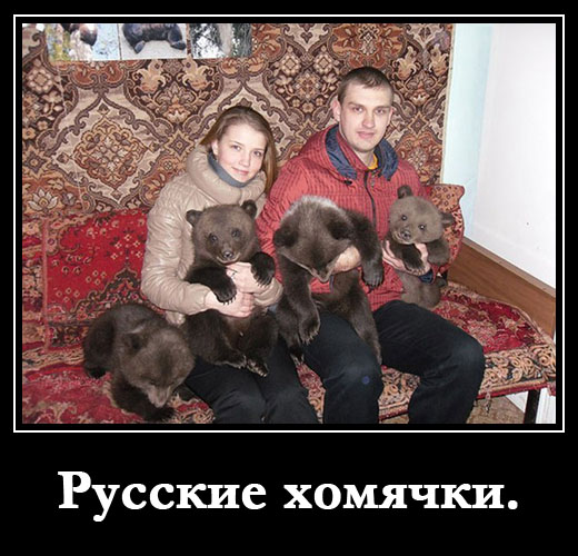 Русские хомячки.